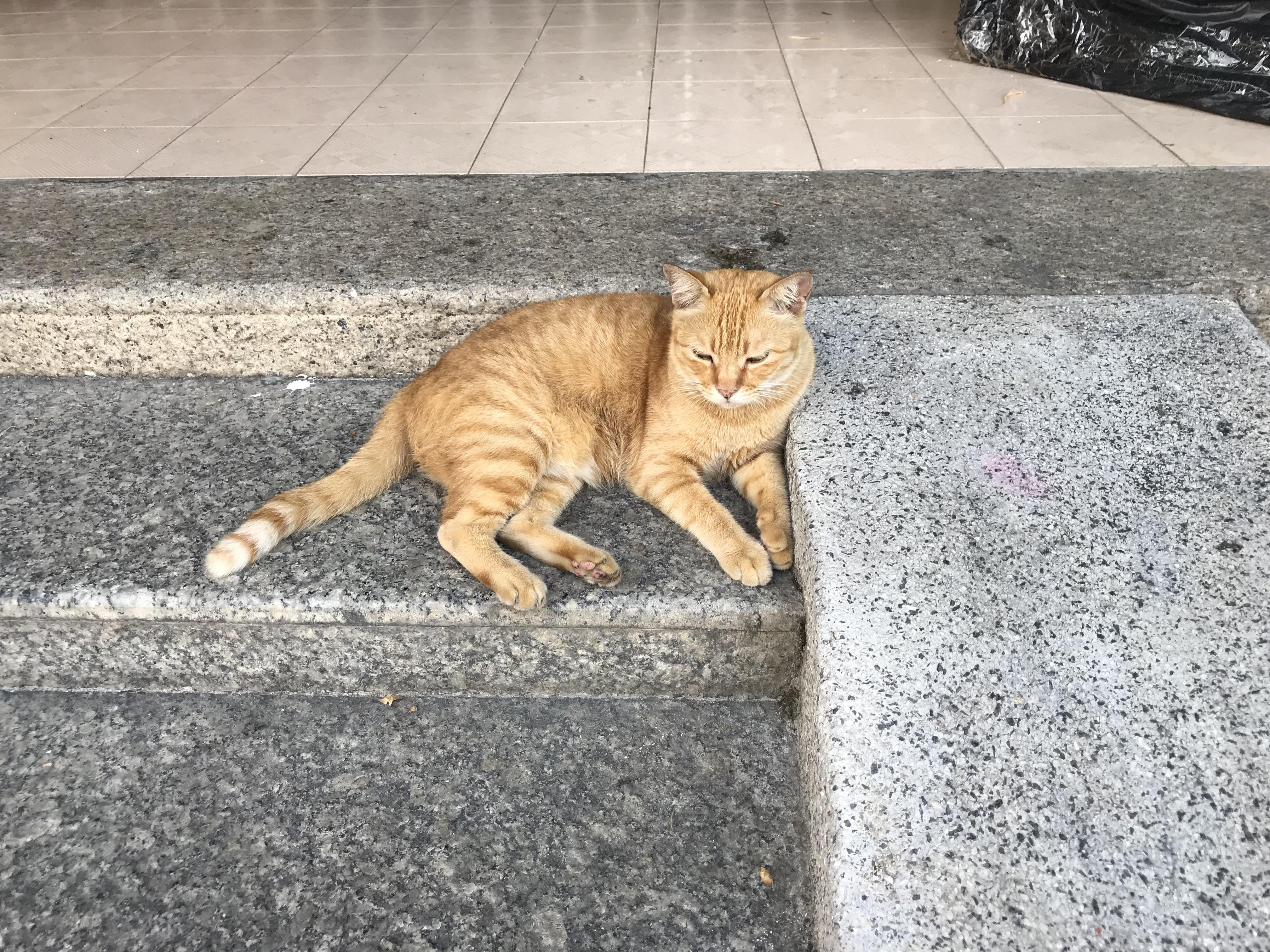 ペナン島 ネコ