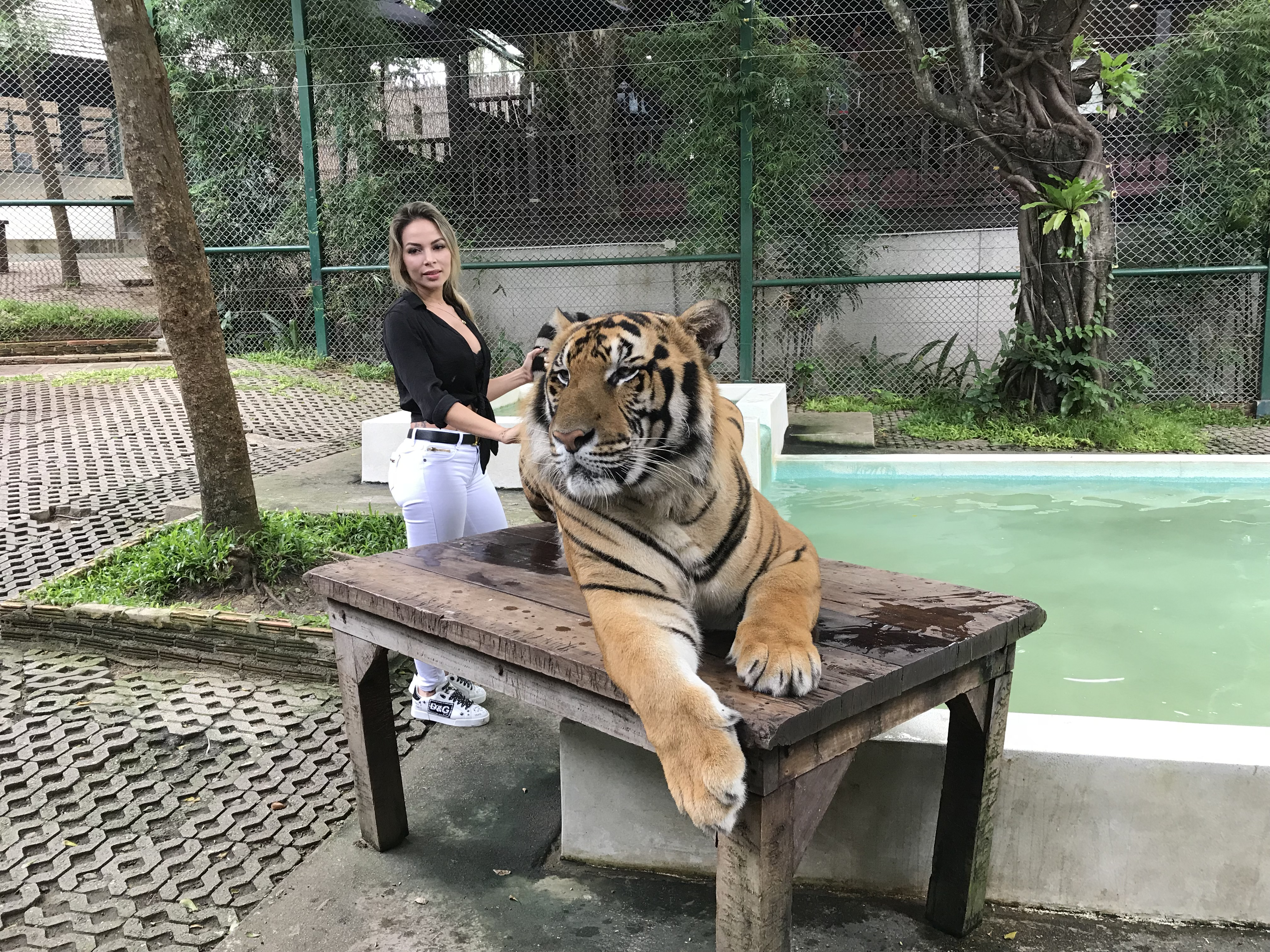Tiger Kingdom Chiangmai