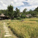 タイで首長族の村を3箇所回って見た結果のオススメの村