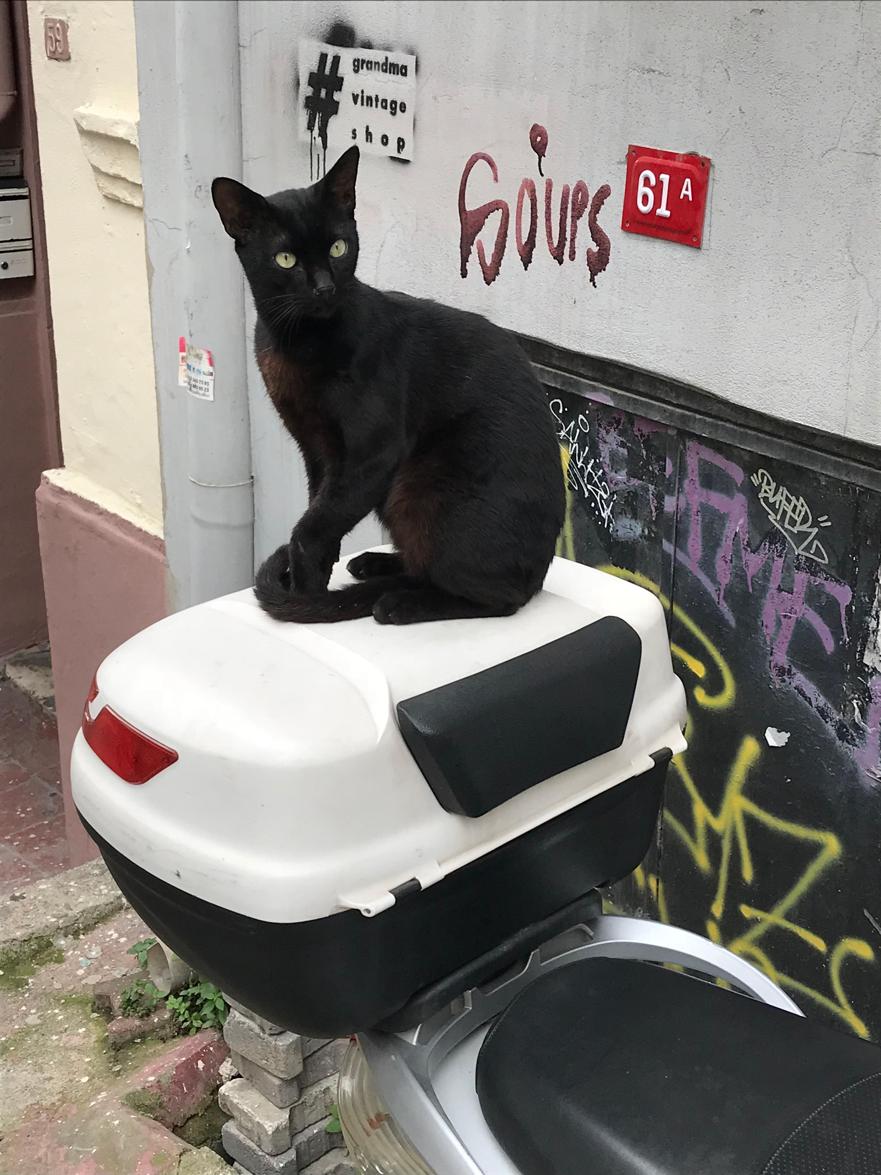 イスタンブールのネコ