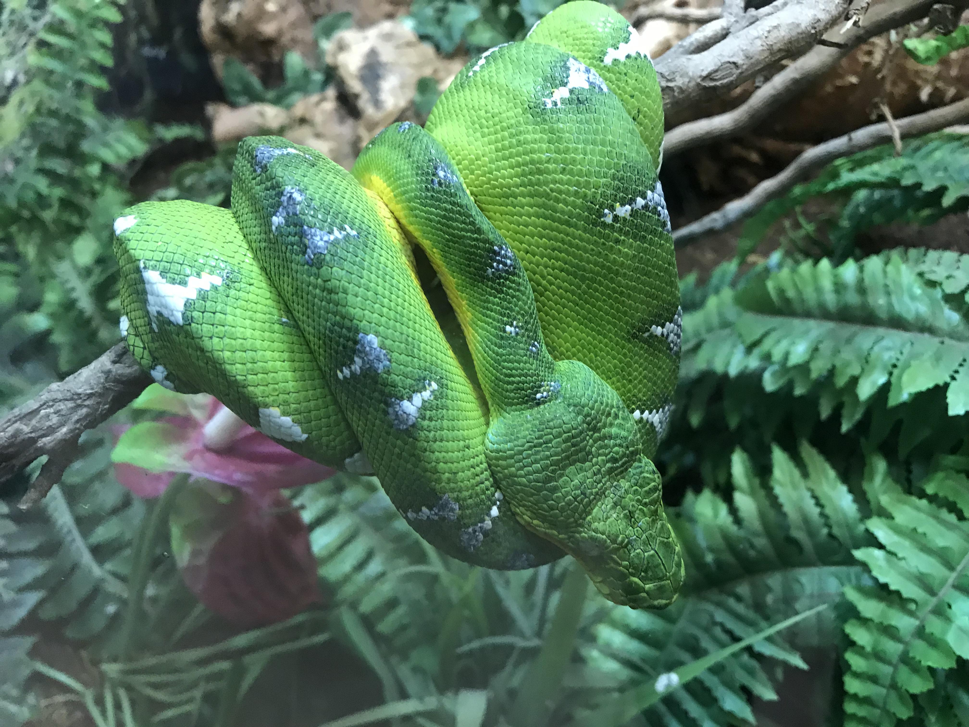 ベオグラード動物園