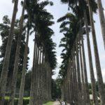 キャンディのペラデニヤ植物園が過去最高だった件について