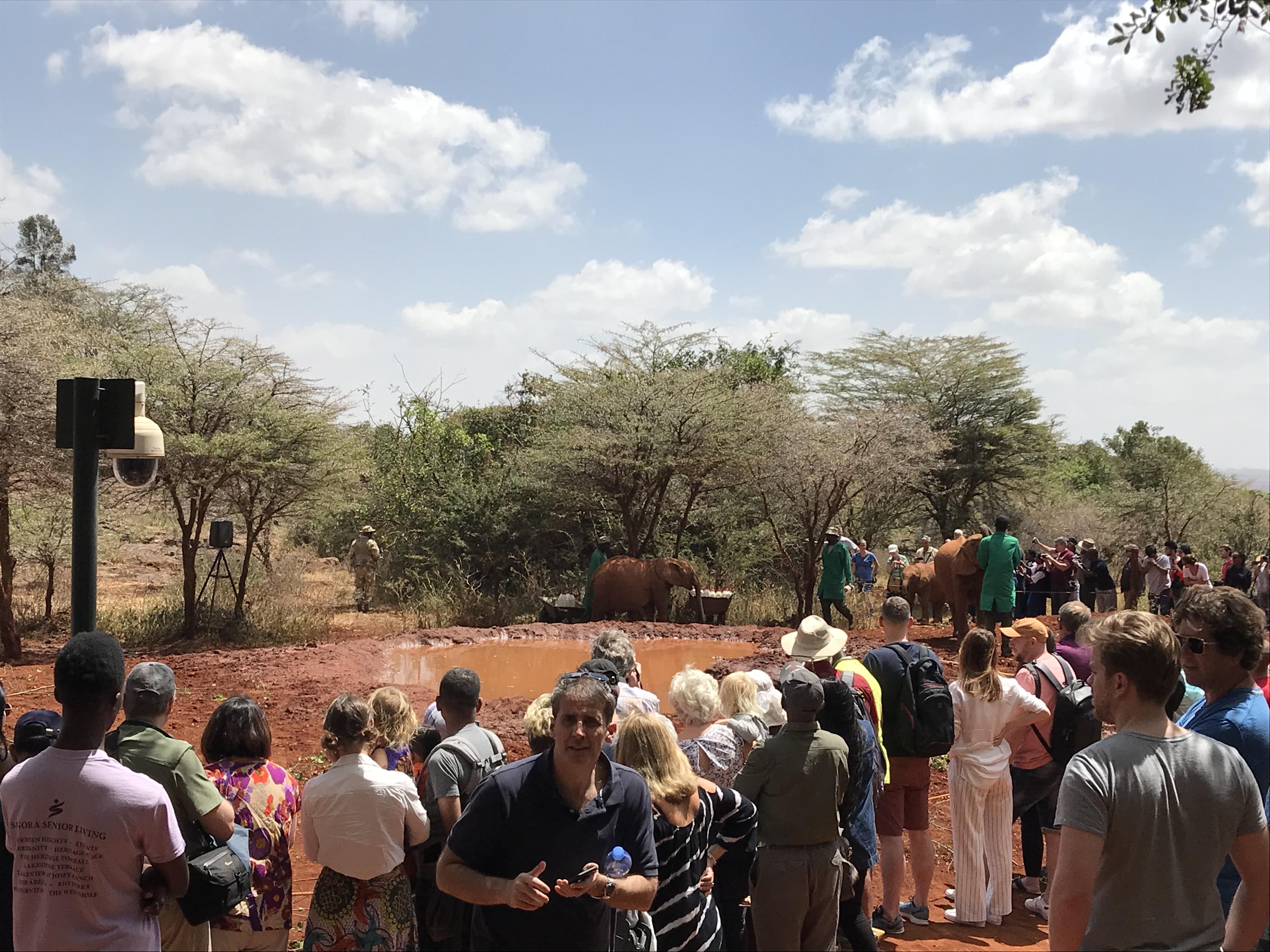 象の孤児院