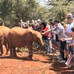 ケニアで象の孤児院とジラフセンターに行って来た