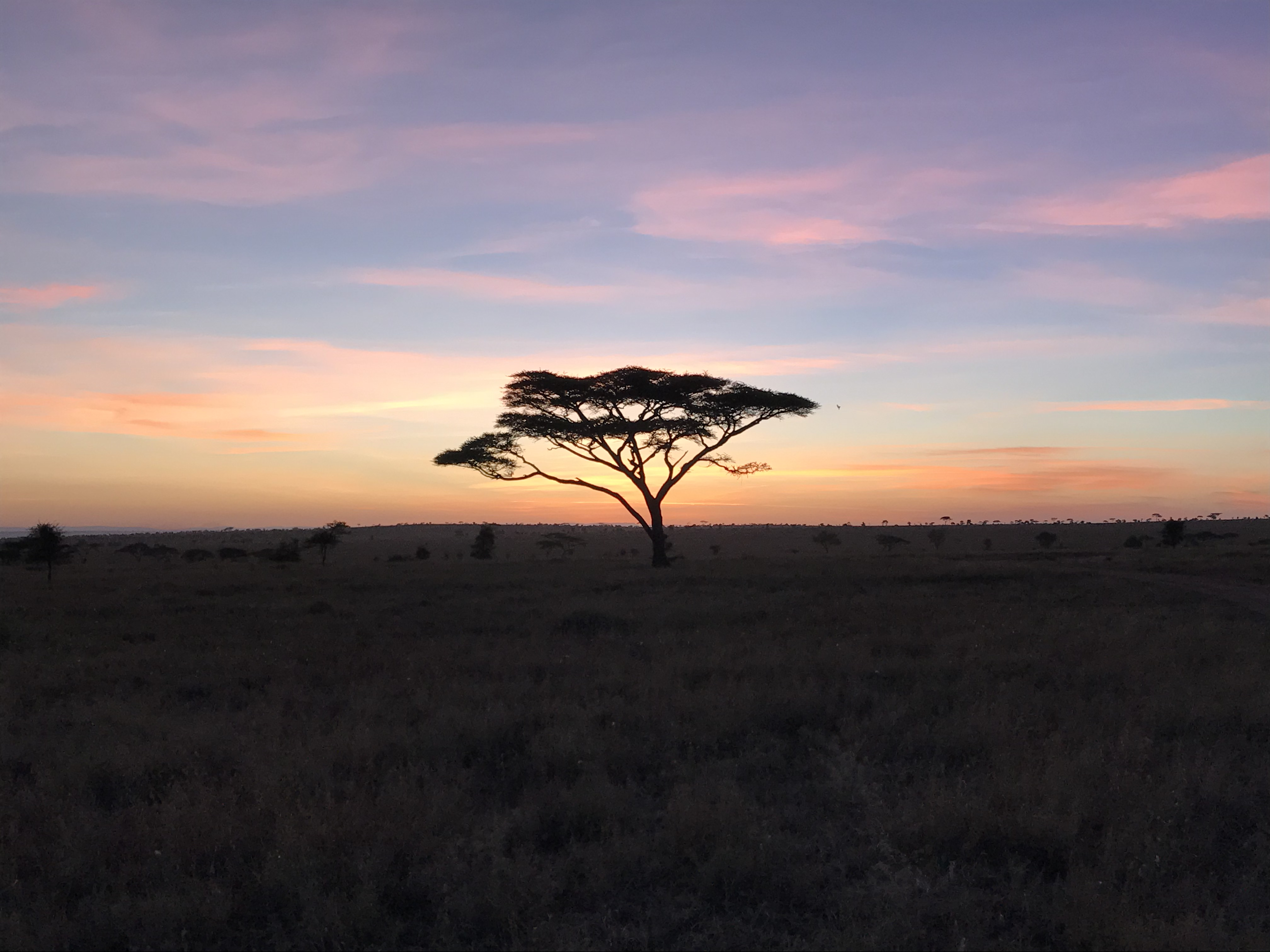 Top ンゴロンゴロ国立公園 , MANGOMES