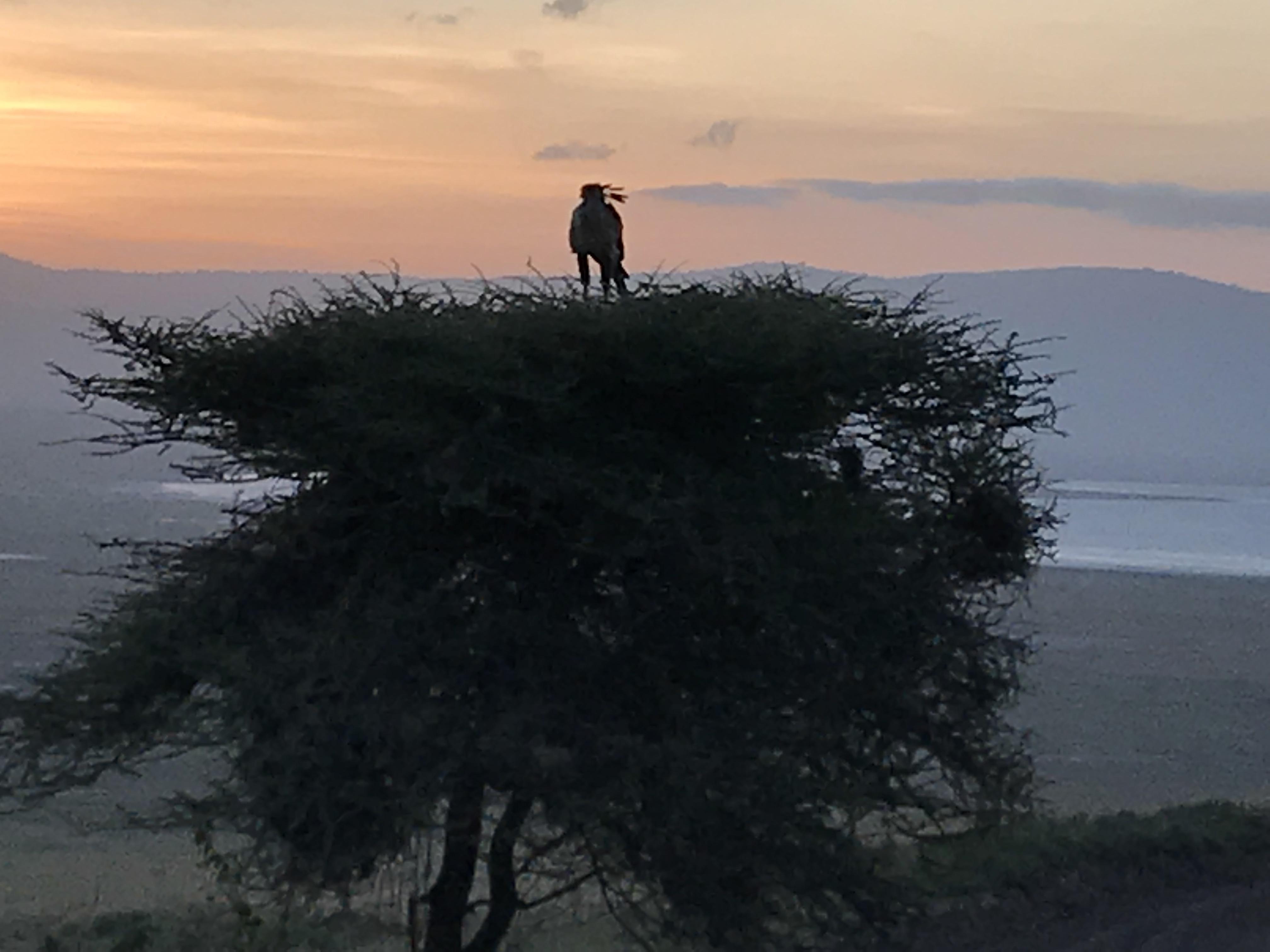 ンゴロンゴロでサファリ