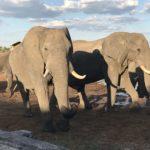 エレファントサンズロッジで大量の象を見ながらキャンプ