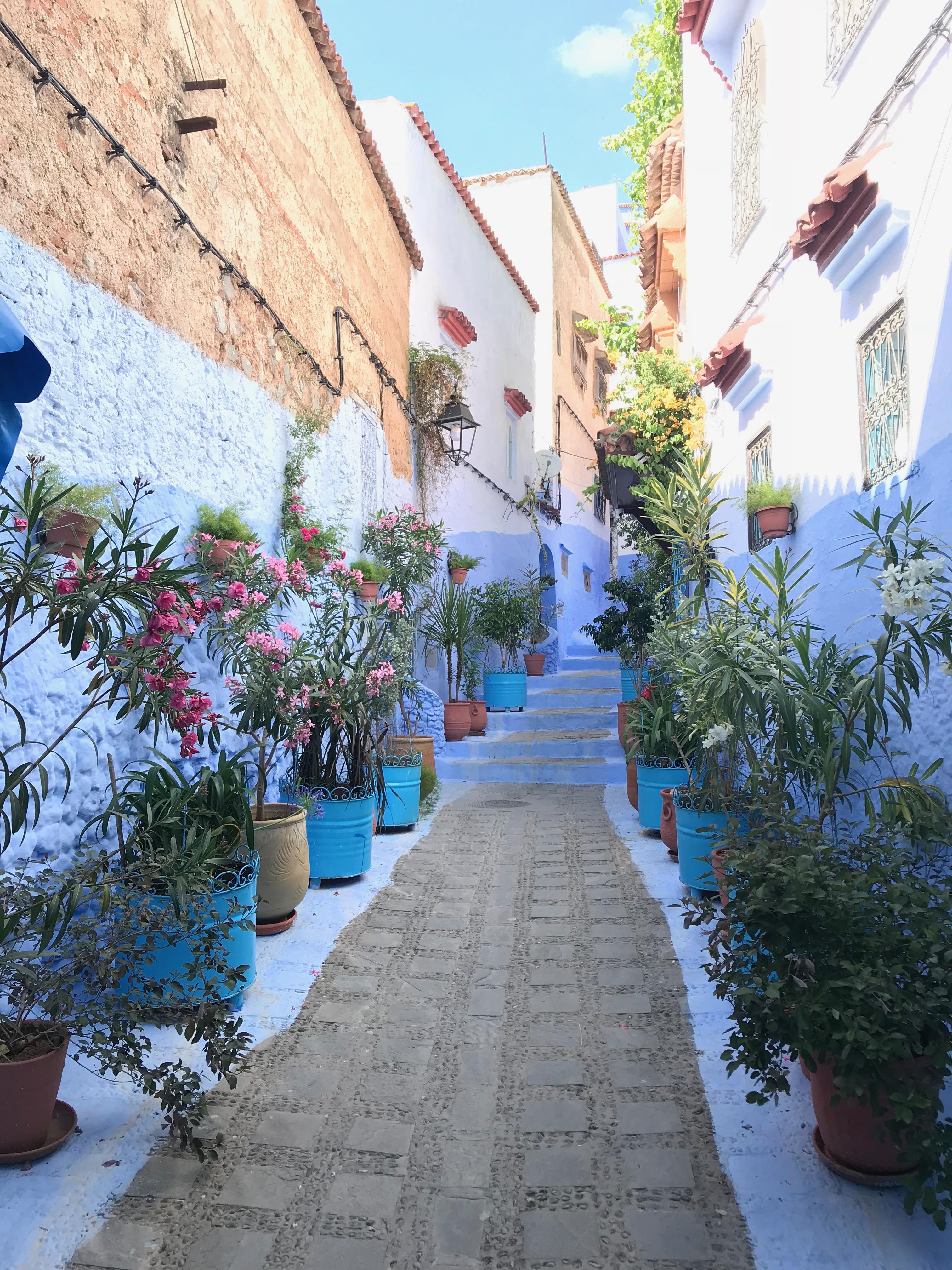 青い植木鉢の通り