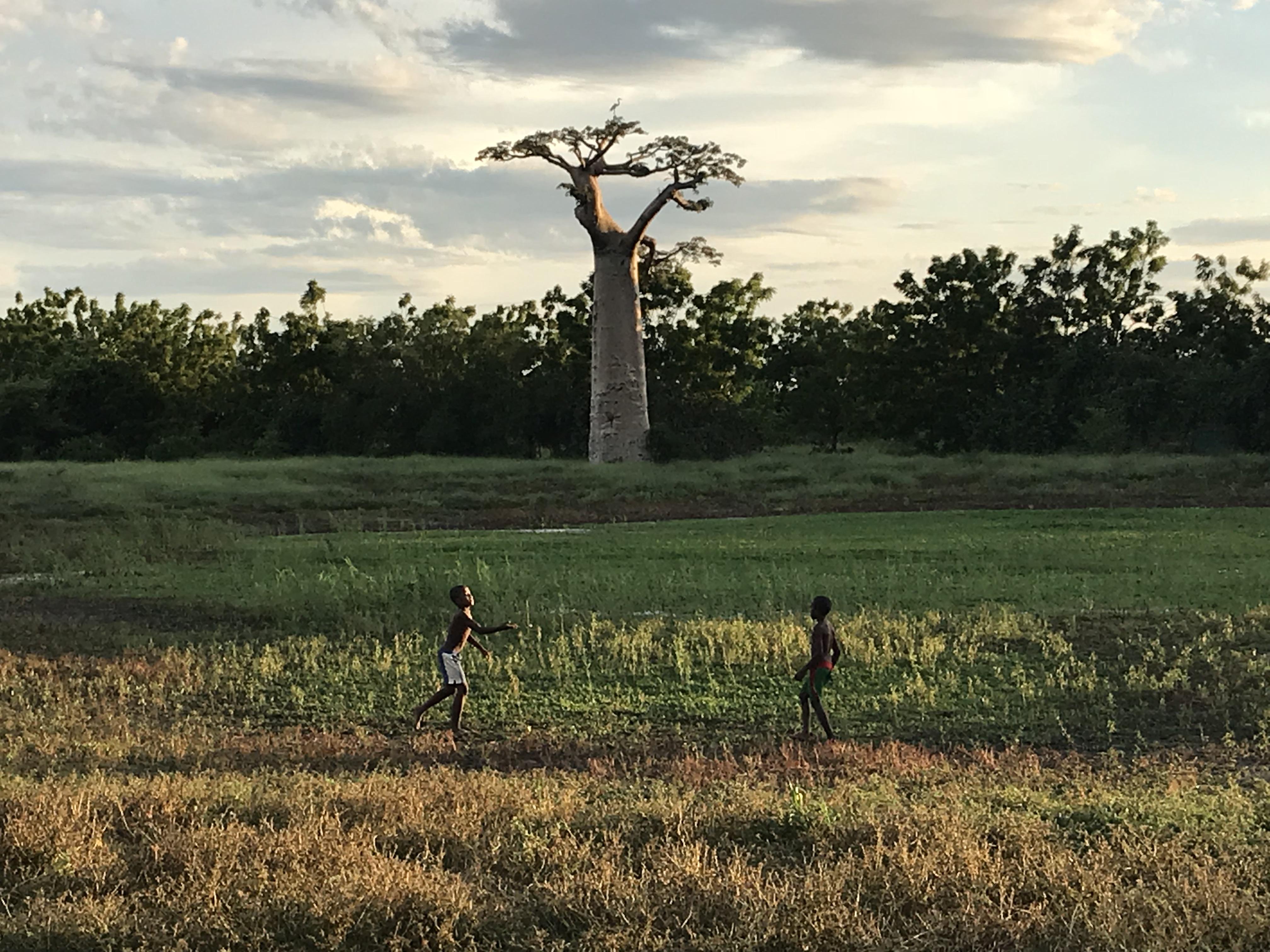 アフリカまとめマダガスカル