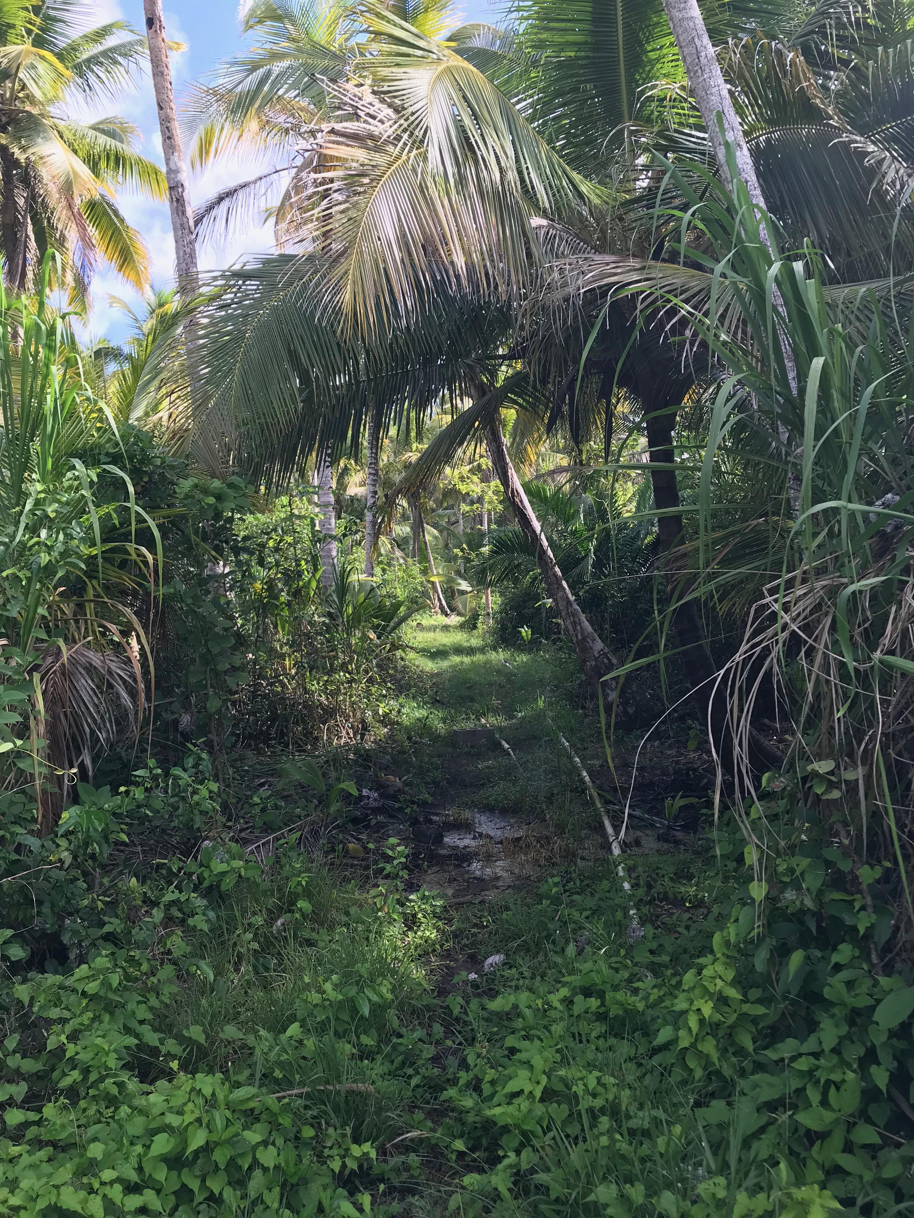 パナマ〜コロンビア国境越え サンブラス諸島